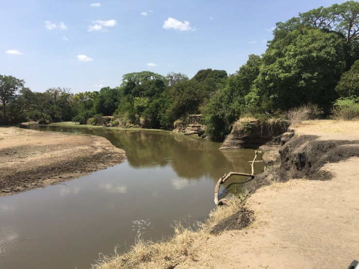 Crocodiles basking on the bank